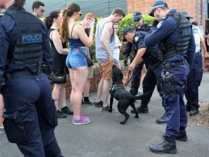Police sniffer dogs check the incoming crowd for drugs at Stereosonic in Brisbane