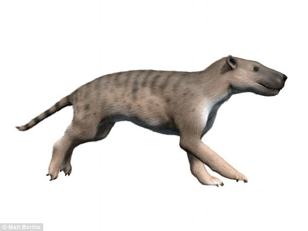 Reconstructed model of a Hyaenodon. Source
